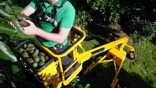 Avocado-1-640h-Maxi
