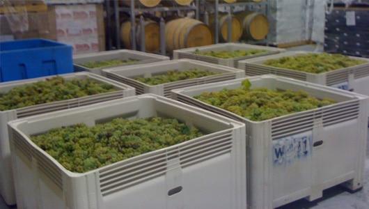 Viniculture-1-Nally MegaBins