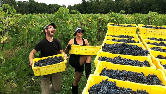 Viniculture-4-rates